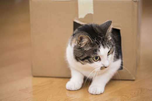 Cat pokes head and front legs out of a cut-out hole in the side of a cardboard box.