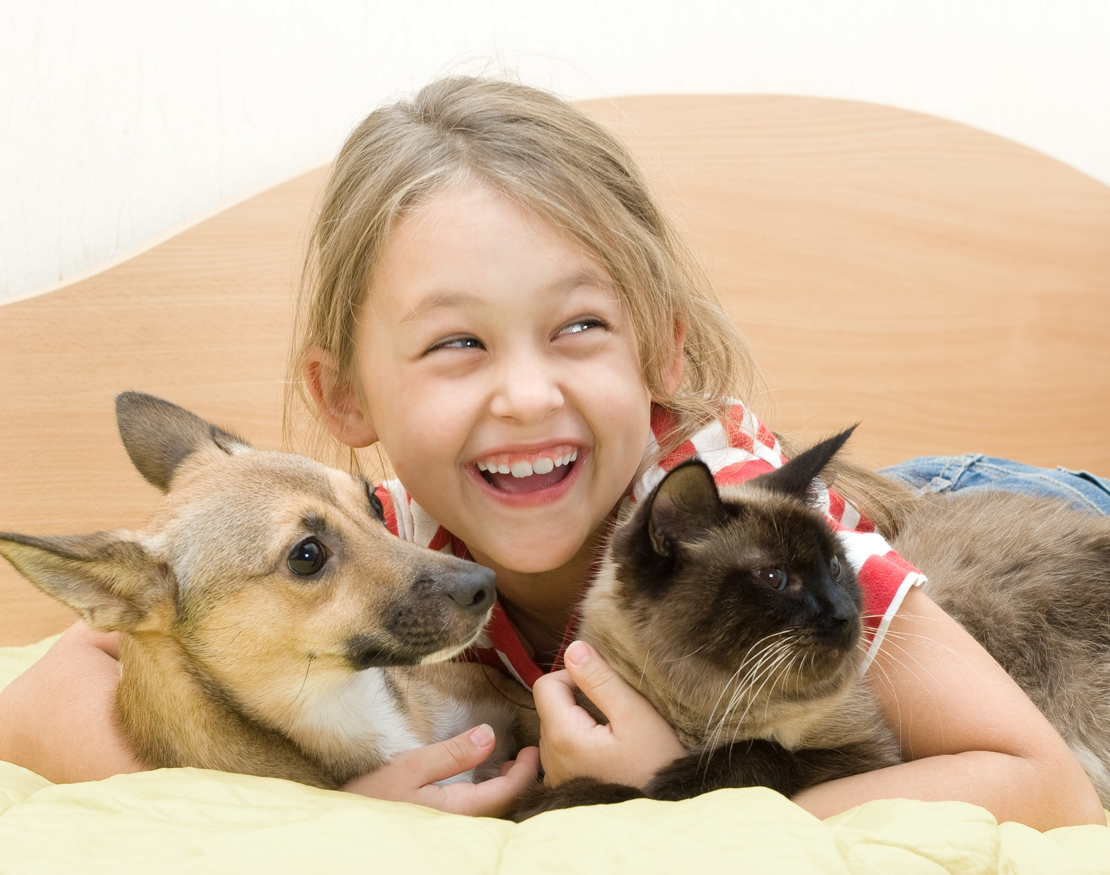 little girl with a dog and a cat on a bed of yellow color