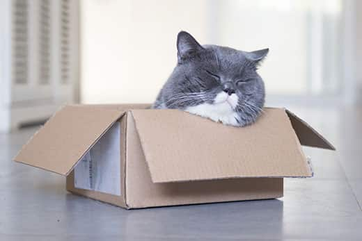 Round gray and white cat sleeps with head out of cardboard box.