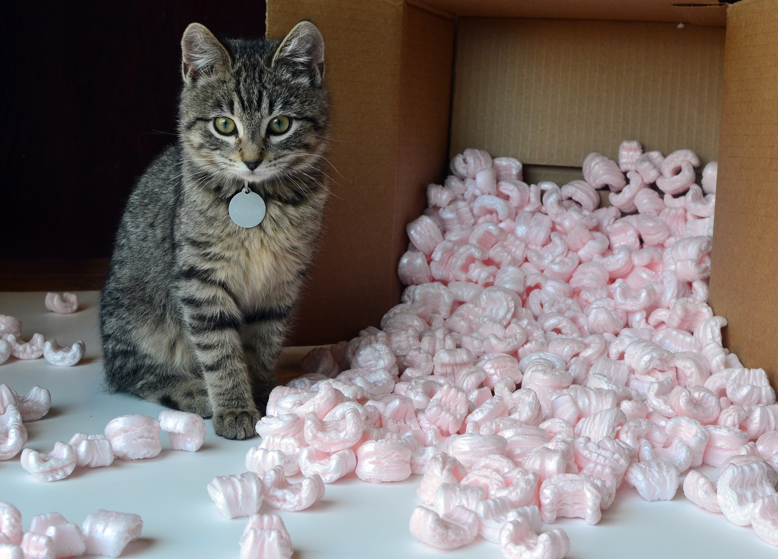 Small tabby cat kitten in spilled box of pink packing peanuts