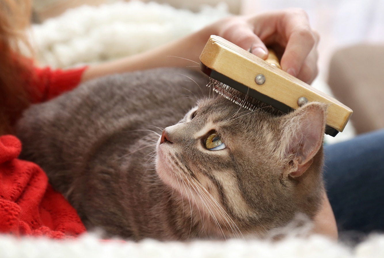 Woman combing cat with brush on couch, close up