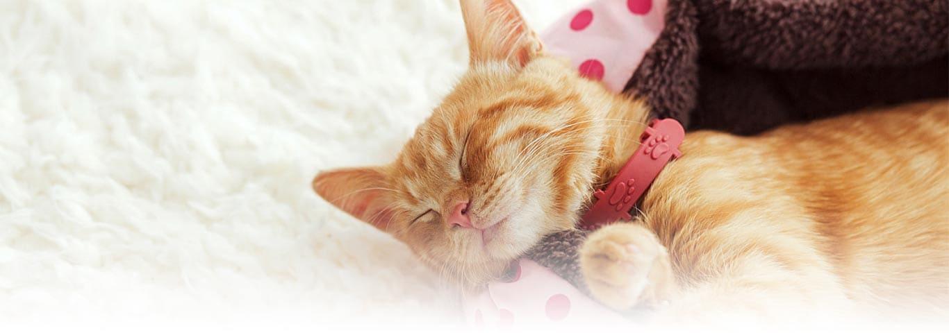 Easy DIY Cat Scratching Post Ideas | Hill's Pet