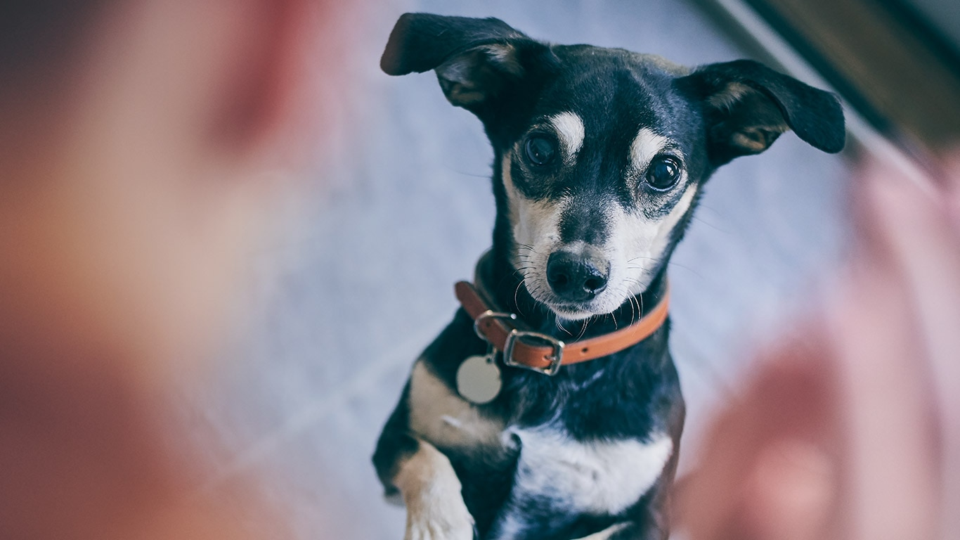 Hill's Pet Nutrition - Dog & Cat Food Transforming Lives