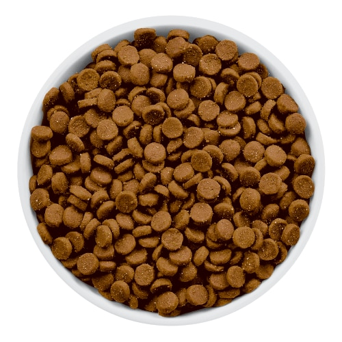 feline prescription diet food id